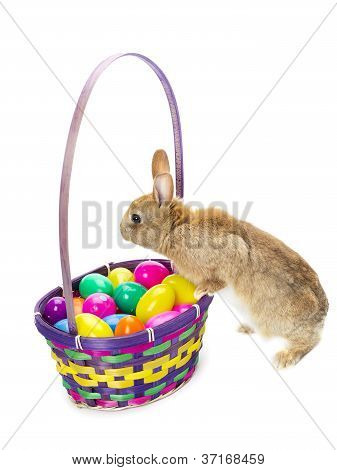 rabbit starring on a basket of eggs