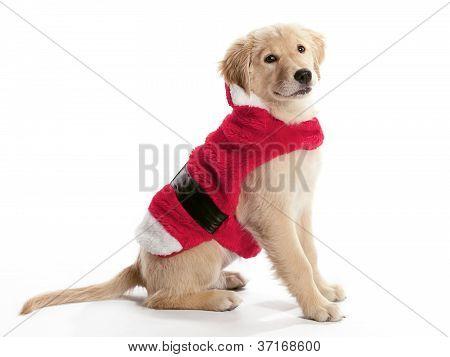 Santa Golden Retriever