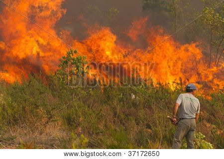 Pombal, Portugal - September 22: Man Watches Helplessly Huge Fire Front On Wildfire, In Pombal, Port