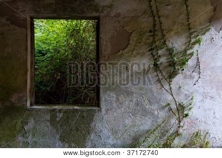 Nature View Through An Window On Abandoned House