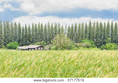 House On Green Field Landscape