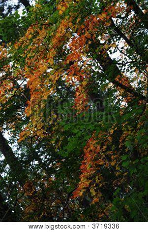 Color Autumn
