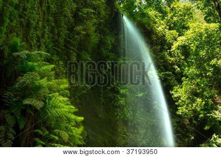 Los Tilos waterfall  Laurisilva in La Palma laurel forest at Canary Islands