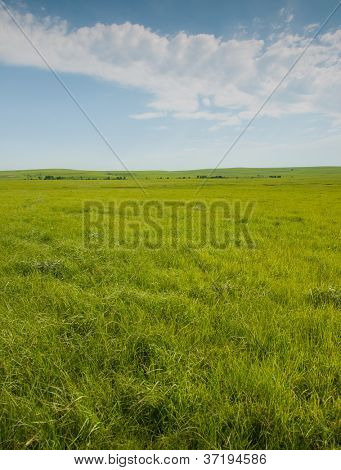 Wide open prairie with lush green grass in late spring