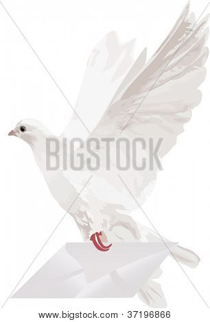 illustration with pigeon and mail on white background