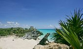 stock photo of playa del carmen  - Green lizard Iguana sunbathing on a rock in front of Carribian sea at Tulum in Mexico Riviera Maya - JPG