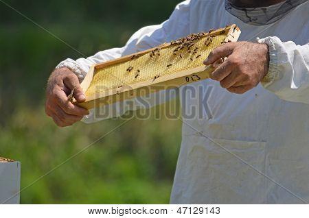 Beekeeper With Honey Comb