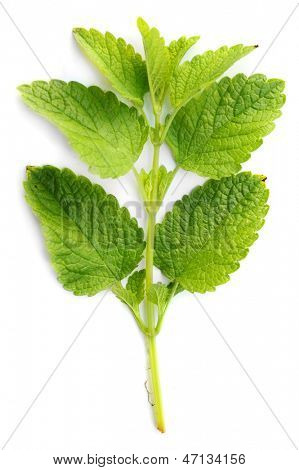 Lemon balm (Melissa officinalis) is often used as a flavouring in ice cream and herbal teas, both hot and iced, often in combination with other herbs such as spearmint.