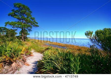 Cape San Blas Florida