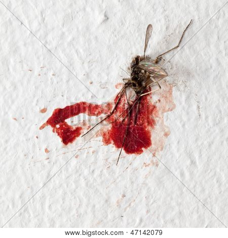 Killed mosquito with lots of blood on a wall