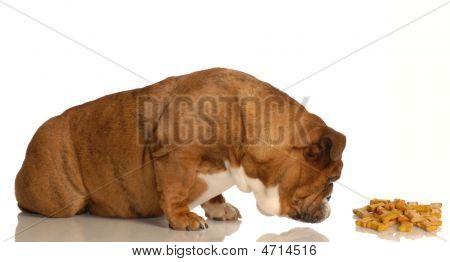 Bulldog Sniffing Out Dog Bones