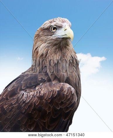 Eagle head close up against blue sky
