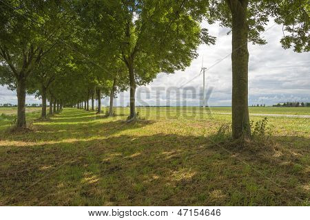 Double row of trees in the countryside