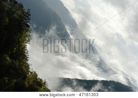 Trees On Misty Mountains
