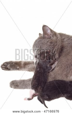 Cat licks gently hugged her newborn kitten.psd