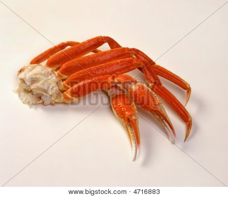 Opilio Snow Crab Cooked Legs On White