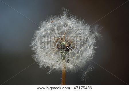 Wish upon...