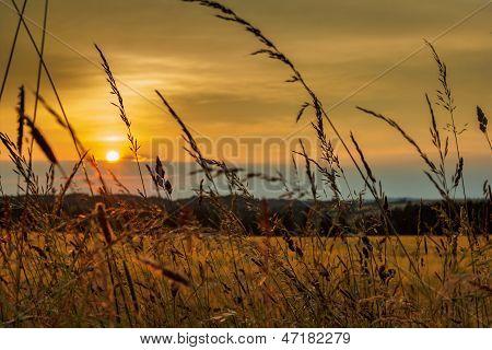 Summer Sunset Over Grass Field