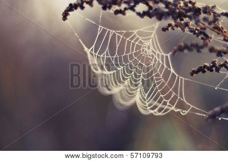 Spider web in the grass