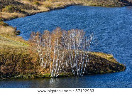 Birch Treetop