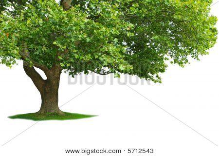 Árbol parcial