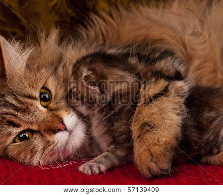 Cat with kitten