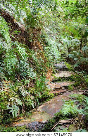 Ferny steps