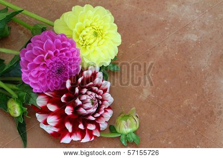 Colorful dahlias on terracotta surface with copy space