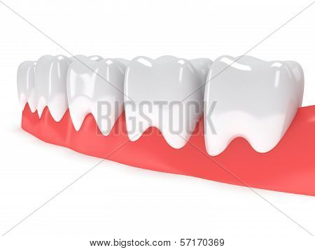 Teeth on gingiva isolated on white back.