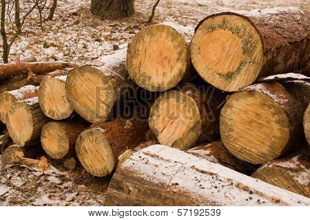 Large Sawn Timber