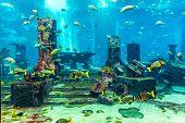foto of school fish  - Photo of a tropical fish on a coral reef in Dubai aquarium - JPG
