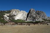 picture of yaks  - Grazing yaks in front of limestone formations - JPG