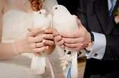 stock photo of ring-dove  - bride and groom holding wedding doves  - JPG