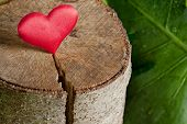image of cutting trees  - Ecology Concept Heart on a Tree cut - JPG