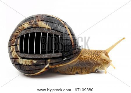 Snail with prison bars on its shell isolated