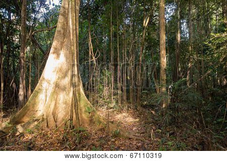 Sunlight Penetrating The Dense Vegetation In The Amazon Jungle