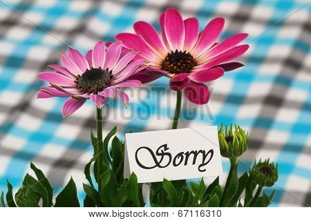 Sorry card with pink gerbera daisies