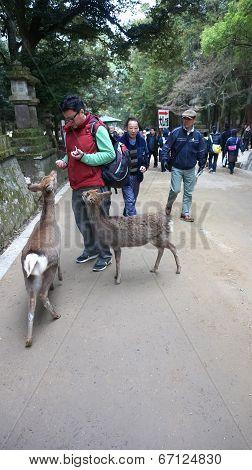 Todaiji in Nara Japan