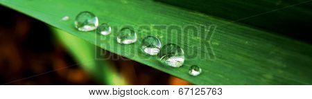 Water Drops On Plant