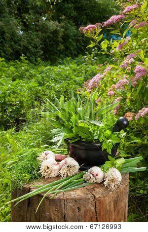 Fresh Flavoring Herbs And Garlic On Wooden Stump In Garden
