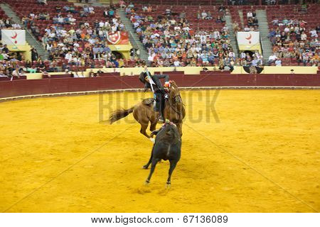 LISBON - JUNE 19: Luis Rouxinol Jr horsemen bullfighter performs at a portuguese style bullfighting show in campo pequeno in Lisbon, Portugal, June 19, 2014