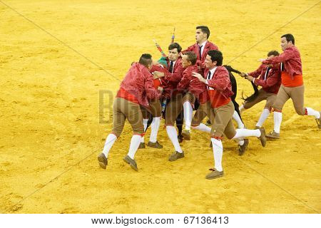 LISBON - JUNE 19: Forcados de Arruda dos Vinhos bullfighters performs at a portuguese style bullfighting show in campo pequeno in Lisbon, Portugal, June 19, 2014
