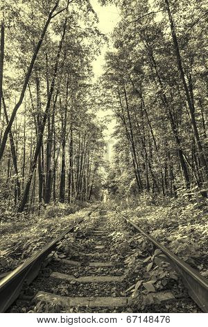 Ancient Style Photo Of Forest Railway