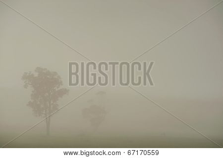 Farmland In Fog