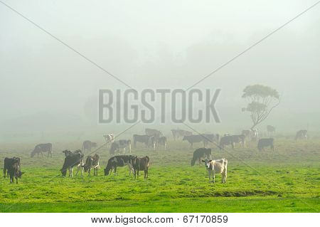 The Herd On A Foggy Morning