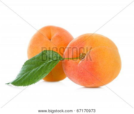apricots close-up isolated on white background