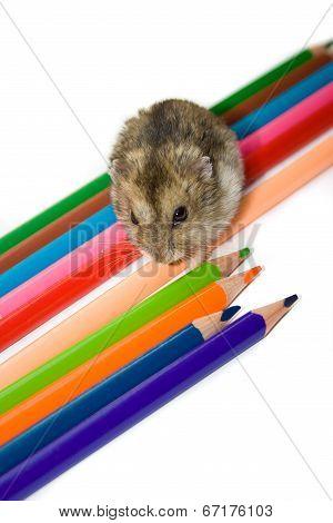 Pet And Pencils