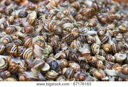 Pile Snails
