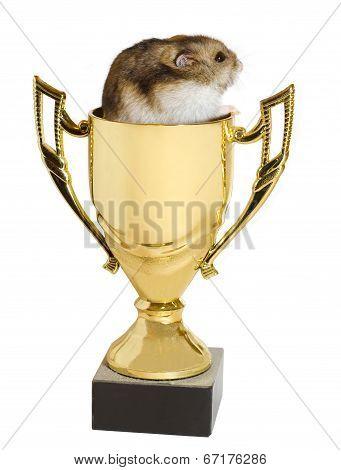 Winner Hamster