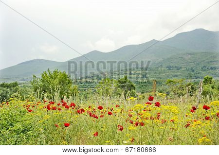 A bush of yellow flowers and red flowers in Ohrid